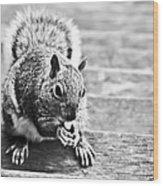 Squirrel Wood Print by Paulina Szajek