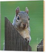 Squirrel Playing Peek A Boo Wood Print