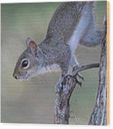 Squirrel Pose Wood Print