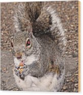 Squirrel Possessed Wood Print