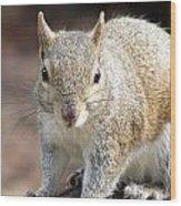 Squirrel Profile Wood Print