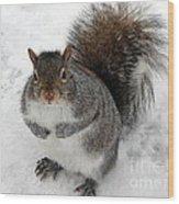 Squirrel Saying Feed Me Please At Niagara Falls Wood Print