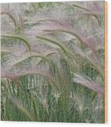 Squirrel Tail Grass In The Wind Wood Print