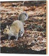 Squirrel Time Wood Print