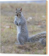 Squirrel With Dirt On Nose Wood Print