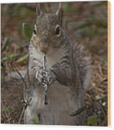 Squirrel With His Obo Wood Print
