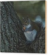 Squirrel With Nut Wood Print