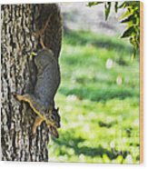 Squirrel With Pecan Wood Print
