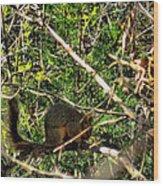 Squirrelcomp 2009 Wood Print