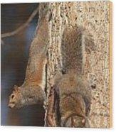 Squirrels Wood Print