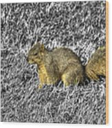 Squirrling Around Looking For Nuts Wood Print