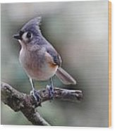 Spring Time Titmouse Wood Print