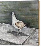 St Augustine Gull Wood Print