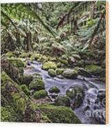 St Columba Falls Wood Print