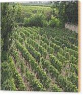 St. Emilion Vineyard Wood Print