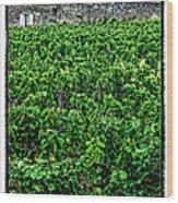 St. Emilion Winery Wood Print