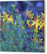 St John's Wort In The Forest Wood Print