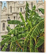 St. Louis Cathedral And Banana Trees New Orleans Wood Print
