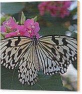 St. Louis Zoo Butterfly Wood Print