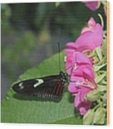 St. Louis Zoo Butterly Wood Print