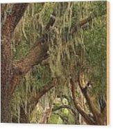 St Simons Island Oaks Wood Print