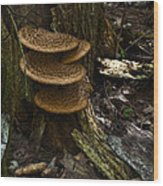 Stack Of Fungi Wood Print