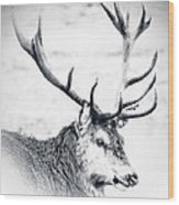 Stag In Black And White Wood Print