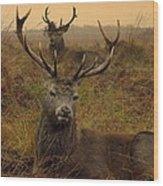 Williams Fine Art Stag Party The Series  Wood Print