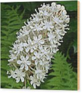 Stagger Grass Lily Wood Print