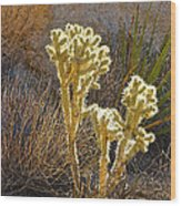 Staghorn Cholla Cactus Catching Sunlight In Joshua Tree Np-ca Wood Print