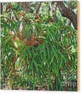 Staghorn Fern Wood Print