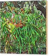 Staghorn Fresco Wood Print