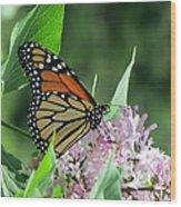 Marvelous Monarch Wood Print