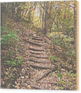 Stairs Into The Forest Wood Print