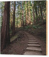 Stairs Into The Woods Wood Print