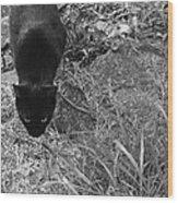 Stalking Cat Wood Print