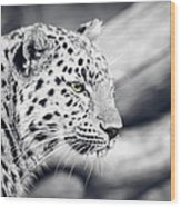 Stalking Prey Wood Print