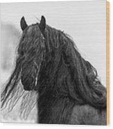 Stallion Beauty Wood Print