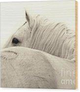 Stallion In Sepia Wood Print