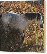 Stallion Of The Badlands Wood Print