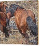 Stallions Gone Crazy Wood Print