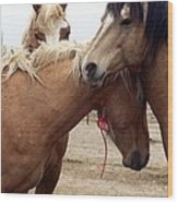Stallions Held Captive Stick Together In Tough Times Wood Print