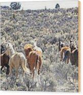 Stampede Of Wild Horses Wood Print