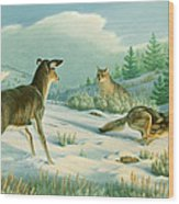 Stand-off  -whitetail Doe And Coyotes Wood Print