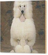 Standard Poodle Dog Wood Print