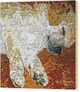 Standard Poodle Puppy Dozing Off Wood Print