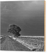 Standing All Alone Wood Print