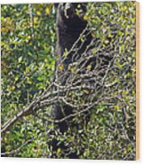Standing Black Bear Wood Print