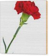 Standing Carnation Wood Print