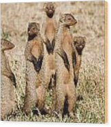 Standing Mongoose Wood Print